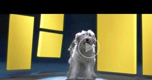 (Vídeo) Arte moderno creado por perros