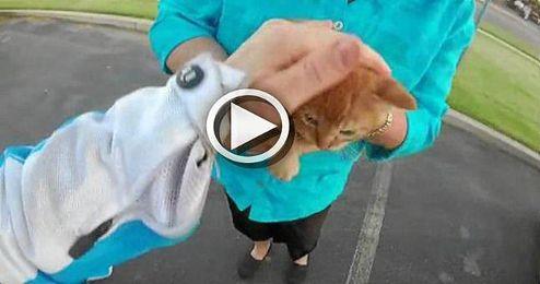 (VÍDEO) Una motera salva a un gatito de una muerte segura