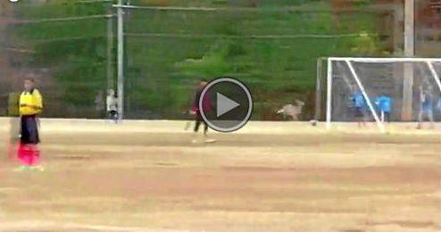(Vídeo) El ciervo goleador