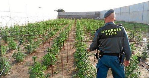 Los invernaderos contaban con todo tipo de condiciones para el cultivo de marihuana.