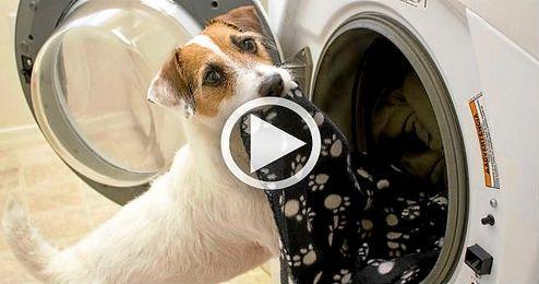 (VÍDEO) ¡Yo también quiero un perro así!