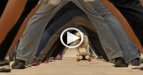 (Vídeo) El perro skater