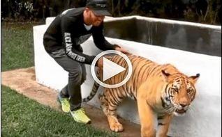 Hamilton se juega el tipo con un tigre