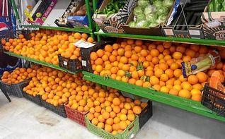 Detenidas 23 personas por robar más de 50.000 kilos de naranjas en fincas agrícolas de la provincia